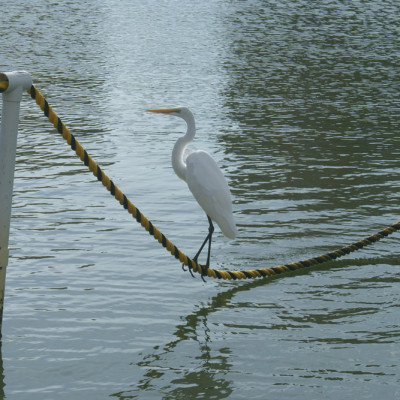 The Ship Store Egret Cocohatchee River Park Florida