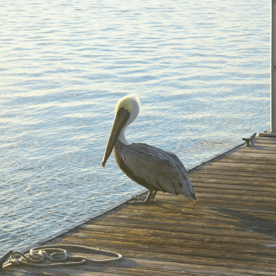 The Ship Store Pelican Caxambas Park & Boat Ramp Marco Island Florida