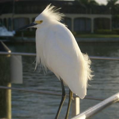 The Ship Store Egret Caxambas Park & Boat Ramp Marco Island Florida